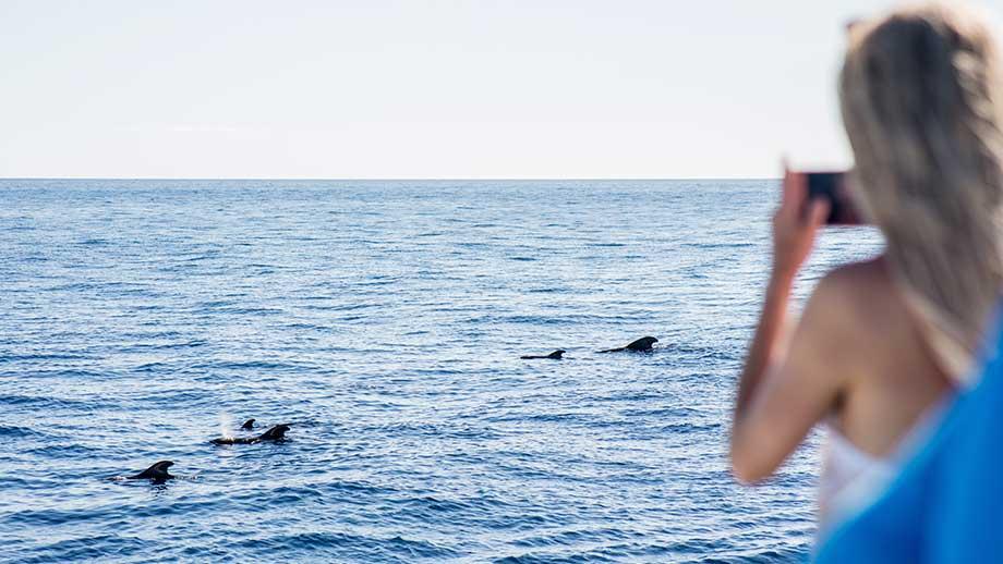 royal delfin catamaran
