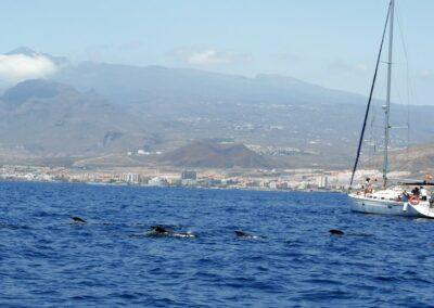 picarus whales