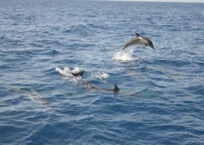 Tenerife Whale Watching Blog